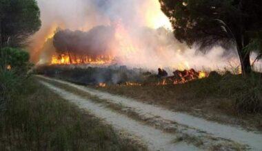 Yine o kentte orman yangını
