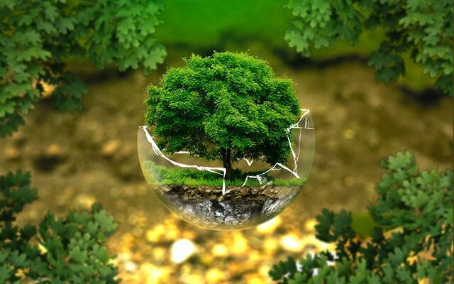 2021'de gezegeni kurtarmak için ne yapmalı? 5 'yeşil' çözüm önerisi